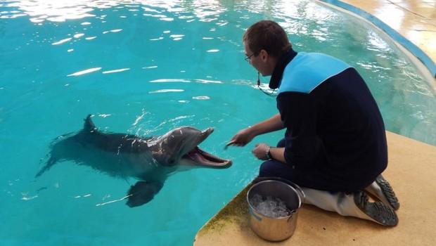 Delfin Arnie im Zoomarine Portugal