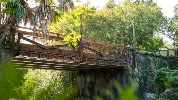 Disney Pandora Avatar Land Entry Bridge Bauupdate