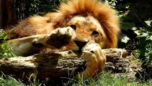 Wie viel willst du zahlen? Zoo Dortmund lässt Preise im Advent 2016 selbst bestimmen