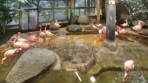 Zoo Karlsruhe Flamingo Indoor-Gehege