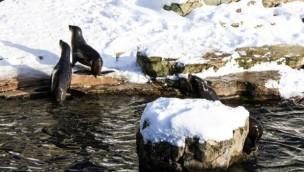Günstig in den Zoo Frankfurt: Ticket-Angebot mit 45 % Rabatt auf den Eintritt
