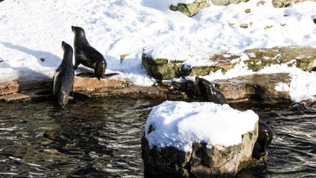 Zoo Frankfurt: Seehund
