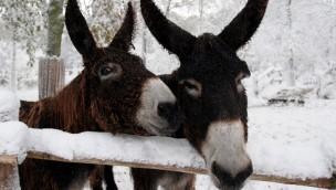 Allwetterzoo Münster Esel im Schnee