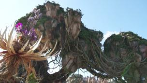 """""""Pandora – The World of Avatar""""-Baustelle im Blick: Thematisierung in neuem Bereich von Disney's Animal Kingdom schreitet voran"""