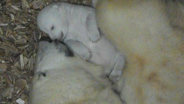 Eibsär-Baby m Tierpark Hellabrunn 20167 - Augen auf 21