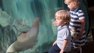 """""""Enkelkinder frei"""" in SEA LIFE-Aquarien im Januar 2017 in Begleitung von Großeltern"""