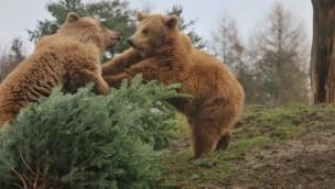 ZOOM Erlebniswelt Weihnachten tierische Bescherung
