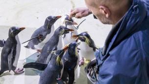 Hellabrunn veröffentlicht Inventur-Ergebnis: 2016 lebten fast 19.000 Tiere im Münchner Tierpark