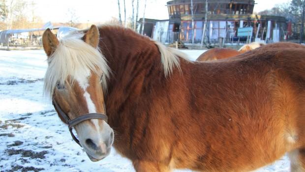 Wildpark Güstrow Pferd