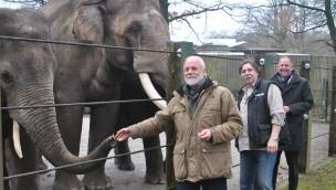 Zoo Osnabrück bereitet sich auf neue Elefantenkuh mit Kind vor