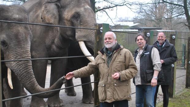 Zoo Osnabrück Elefantenkühe 2017 Ankunft