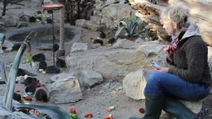 Zoo Osnabrück beendet Inventur 2016: Am Schölerberg leben 3.060 Tiere