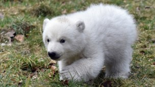 Tierpark Hellabrunn Eisbären-Mädchen