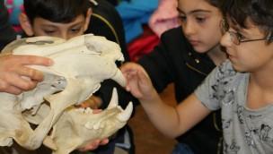 Zahnpflege bei Zootieren: RWE Zooschule informiert Teilnehmer in der ZOOM Erlebniswelt