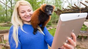 ZOOM Erlebniswelt in der Saison 2017: Mehr sehen, mehr wissen und mehr erleben in der Digitalen Erlebniswelt