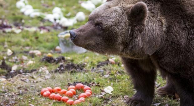 Tierpark Hellabrunn - Braunbärin Olga