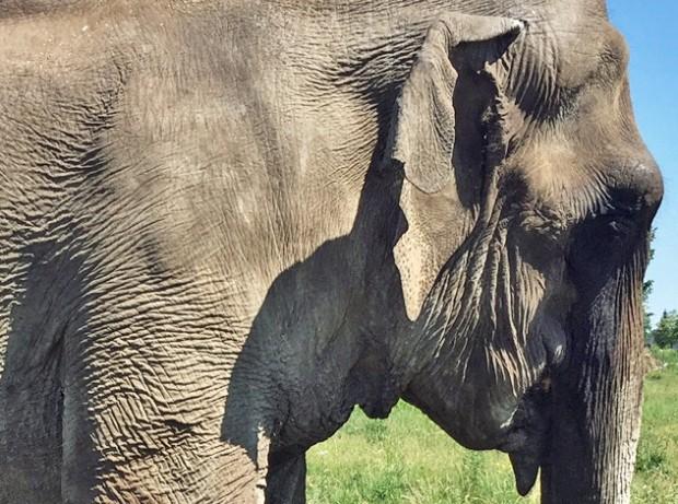 Elefantenkuh Maya kommt nicht in Zoo Karlsruhe