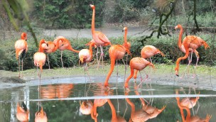 Flamingos im Zoo Rostock