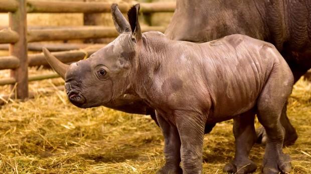 Serengeti-Park Hodenhagen Nashorn Baby
