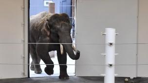 Tierpark Hellabrunn Ankunft Elefant Gajendra