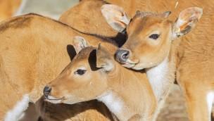 Münchner Tierpark Hellabrunn trauert um vier Tierpersönlichkeiten und freut sich über Geburtenboom