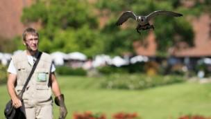 Weltvogelpark Walsrode: Flug-Show 2017 völlig neu konzipiert
