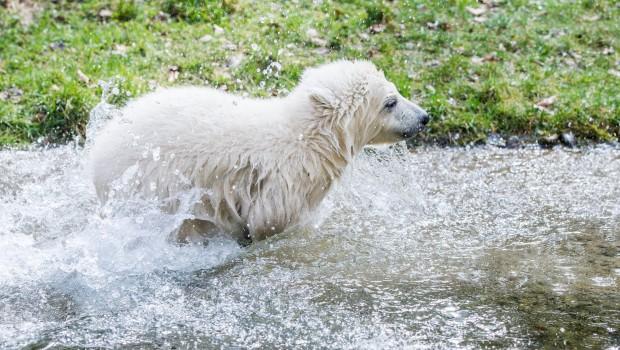 Tierpark Hellabrunn Eisbärenbaby Quintana Taufe