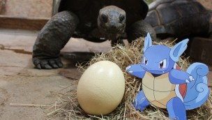 Zoo Osnabrück Pokémon-Eiersuche 2017 im April
