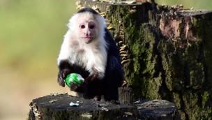 """Serengeti-Park für Kinder zu Ostern 2017 kostenlos: """"Eintritt frei mit Osterei""""-Aktion am Ostersonntag"""