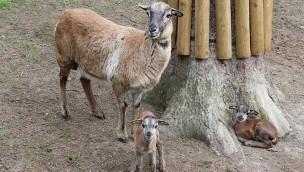 Bayern-Park kündigt Tierbegegnungen an: Gemeinsames Füttern und Pflegen von Schaf- und Ziegenkindern ab Mai 2017
