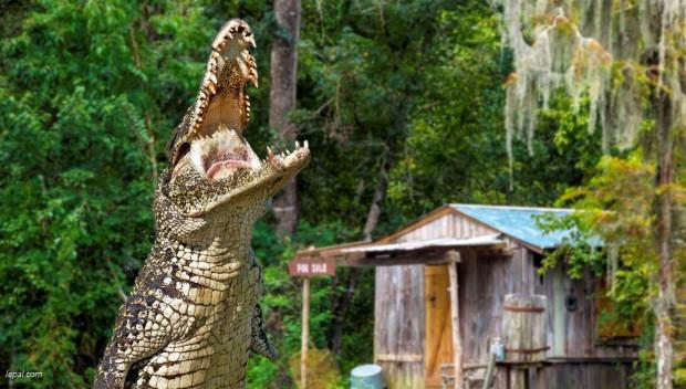 Le Pal Alligator Park