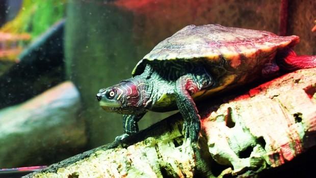 Schildkröten SEA LIFE Oberhausen Sonderausstellung