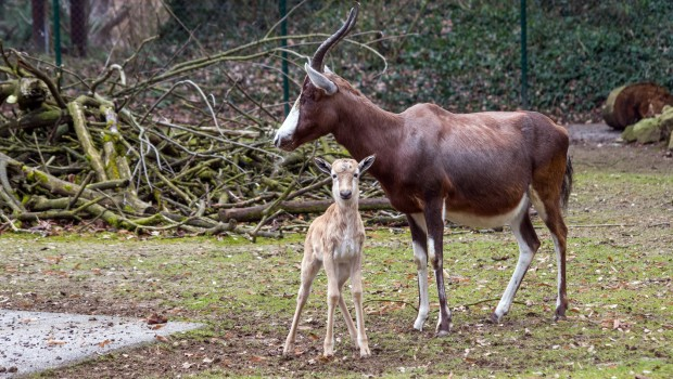 Zooschule Heidelberg Mutter Kind Tag 2017