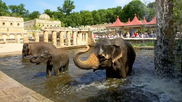 Elefanten Zoo Hannover