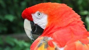 """Pippi Langstrumpf-Papagei wird 50 Jahre alt: Zoo Karlsruhe veranstaltet Feier für """"Rosalinda"""""""