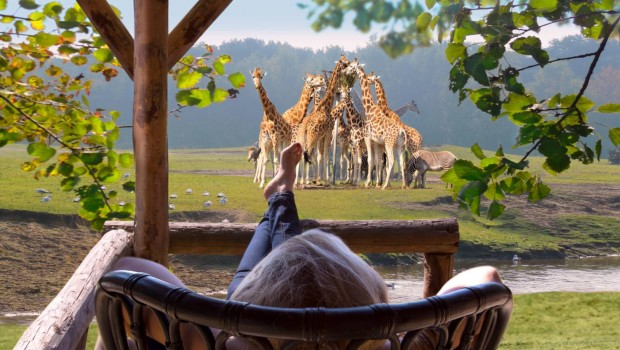 Safaripark Beekse Bergen Safari-Resort