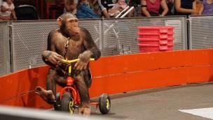 Schwaben-Park Affen Show Dreirad