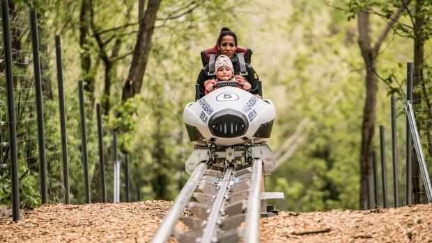 Sommerrodelbahn in Berlin: Natur-Bobbahn im Kienbergpark