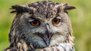 Tierpark Sababurg mit IKEA Family Card 2017 zum Vorteilspreis: Tierisches Vergnügen zum kleinen Preis