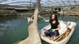 Burgers' Zoo Arnheim: Überdachte 3.000 Quadratmeter große Mangrove eröffnet am 12. Juli 2017