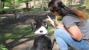 Güstrower Wildpark-MV veranstaltet Hundetag 2017 mit freiem Eintritt für Hunde am 10. Juni