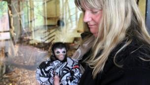 Zoo Osnabrück: Klammeraffen-Baby wird von Tierpflegerin großgezogen