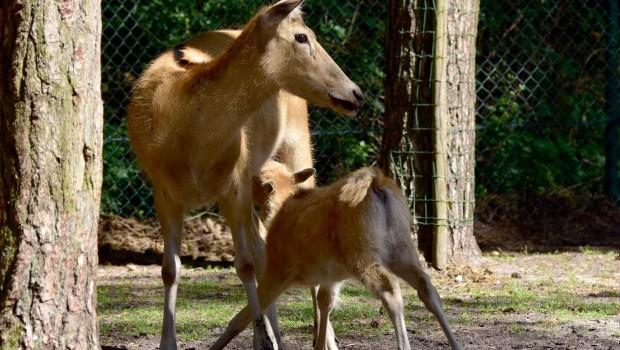 Serengeti-Park Nachwuchs 2017 Pater-David-Hirsch