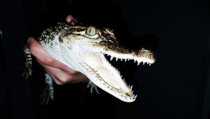 Welt der Reptilien - Zoo Torgau - Krokodil