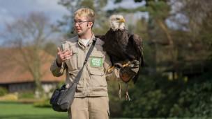 Weltvogelpark Walsrode Weißkopfseeadler mit Trainer