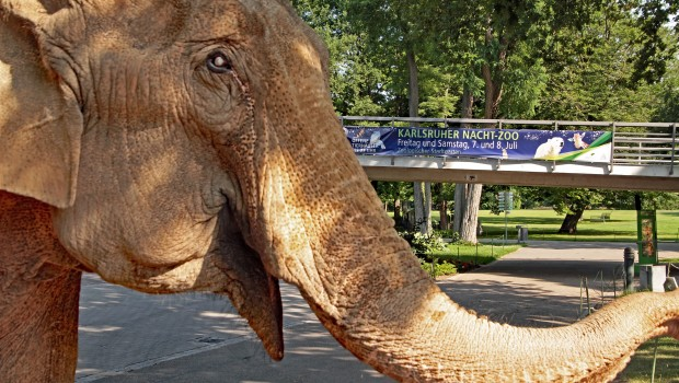 Zoo Karlsruhe Nacht-Zoo 2017 Nanda