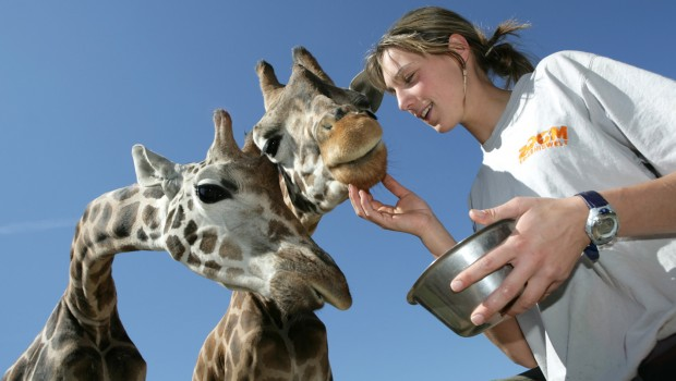 ZOOM Erlebniswelt Giraffen mit Pfleger