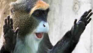 """Erlebnis-Zoo Hannover verschiebt Eröffnung von """"Afi Mountain"""": Neue Themenwelt eröffnet am 11. August 2017"""
