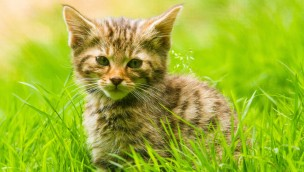 Erlebnispark Tripsdrill Wildkatze Baby