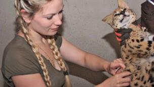 Impfung des Serval im Tier- und Freizeitpark Thüle